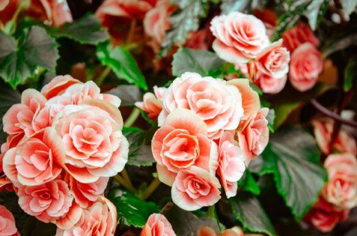 bloemstuk overlijden